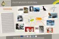 wildlife1_photo